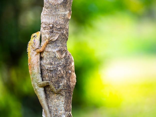 Kameleon to azjatycki gatunek zwierząt żyjący na drzewie.