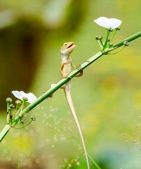 Kameleon z szczęśliwym dniem