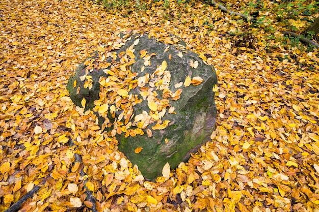 Kamień pod żółtymi i pomarańczowymi opadającymi liśćmi