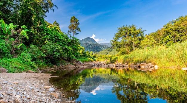 Kamień rzeczny i drzewo, drzewo rzeki widok wody, rzeka kamień w liściach drzewa w lesie