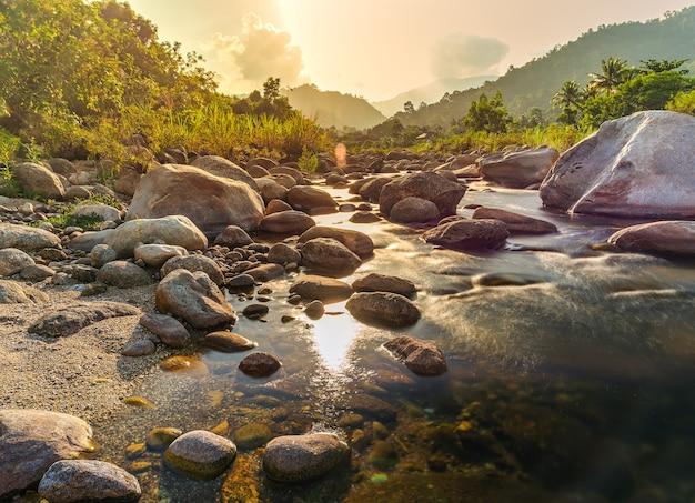Kamień rzeczny i drzewo z wiązką słońca, kamienna rzeka i promień słońca w lesie