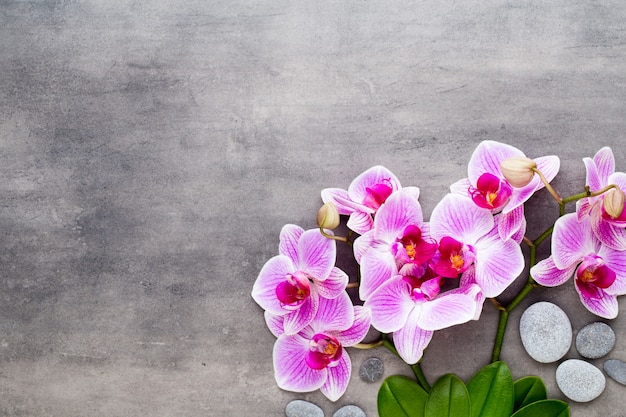 Kamienie orchid i spa na tle kamienia