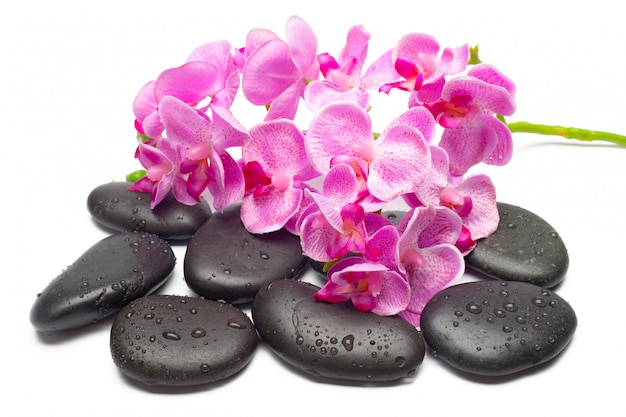 Kamienie spa i kwiaty orchidei, na białym tle,