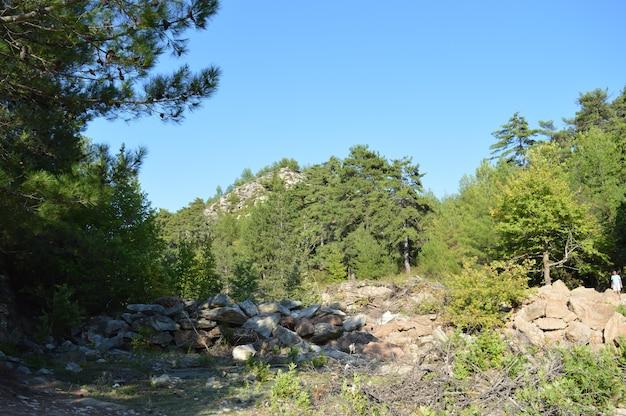 Kamienie w świerkowym lesie w górach