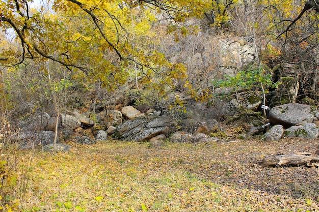 Kamienie w zagajniku w jesiennym lesie