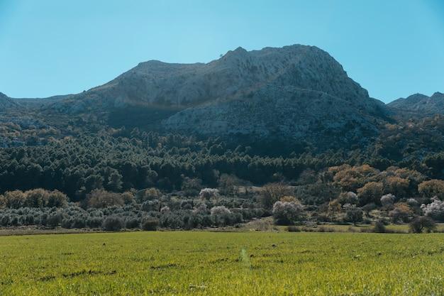 Kamienista góra z licznymi drzewami