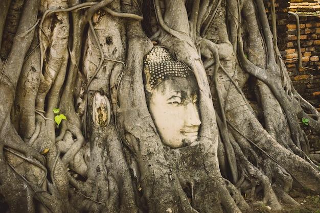 Kamienna głowa buddha otaczająca drzewem zakorzenia w wata prha mahathat świątyni w ayutthaya, tajlandia