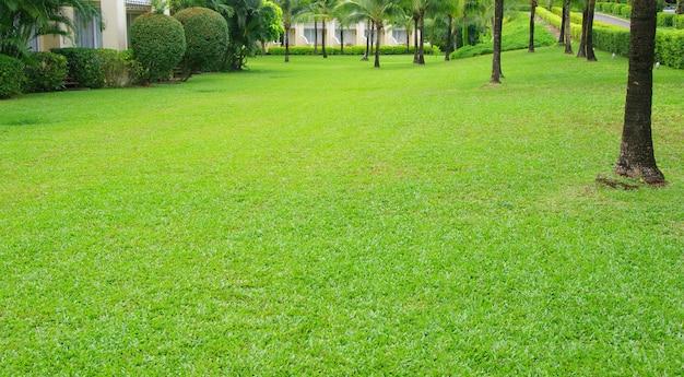 Kamienna ścieżka ogrodowa z trawą