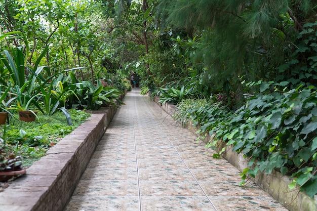 Kamienna ścieżka w ozdobnej szklarni. tropikalna oranżeria