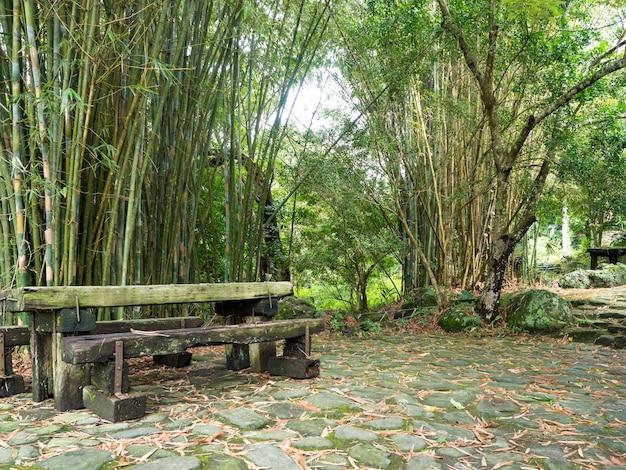 Kamienna ścieżka z bambusowymi drzewami w jesiennym ogrodzie