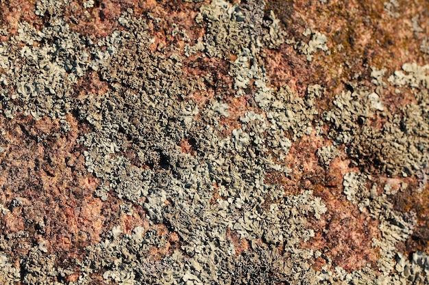 Kamienna stara tekstura z bliska makro