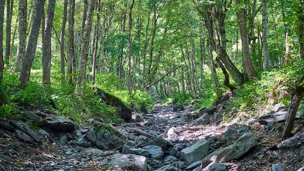 Kamienne koryto rzeki w lesie, lato w soczi, rosja