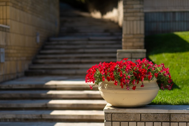Kamienne schody w zielonym ogrodzie.
