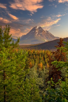 Kanada las krajobraz z dużą górą w tle