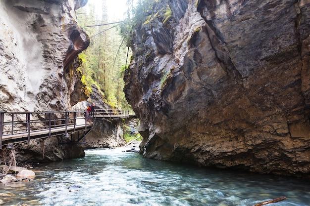 Kanion johnston w banff np, kanada. piękne naturalne krajobrazy w kolumbii brytyjskiej. sezon letni.