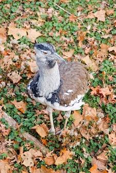 Kansas city, missouri. drop kori. latające ptaki na świecie.
