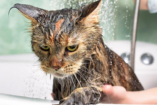 Kąpiel dla kotów