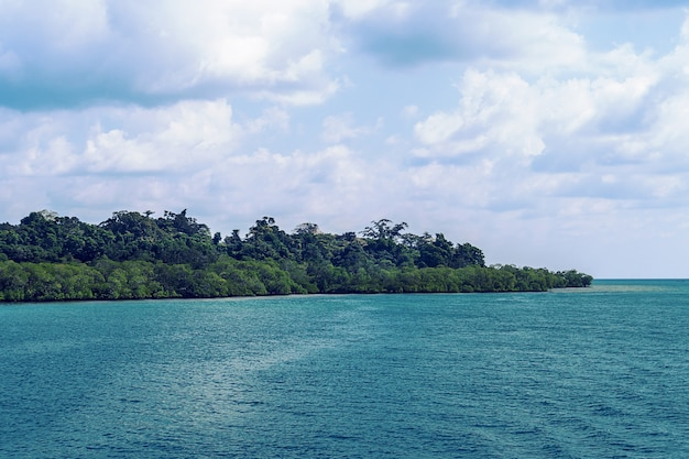 Karaibska dzika plaża, z zielonym lasem skierowanym w stronę morza i samotnym drzewem prawie w wodzie morskiej.