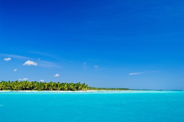 Karaibska plaża i palmy. raj. koncepcja wakacji i turystyki.