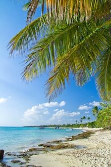 Karaibska plaża i palmy