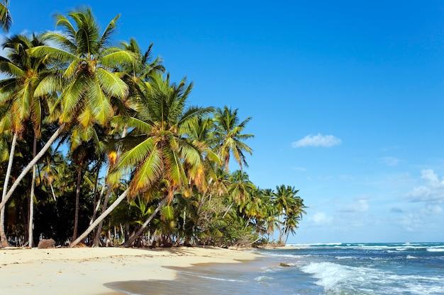 Karaibska plaża z palmami i niebieskim niebem