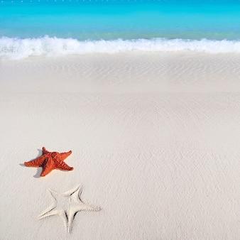 Karaibska rozgwiazda tropikalnych piasku turkusowa plaża