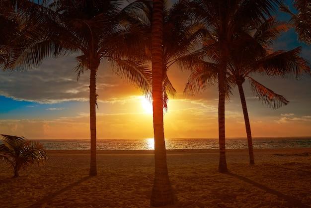 Karaiby plaży kokosowych drzewek palmowych zmierzch