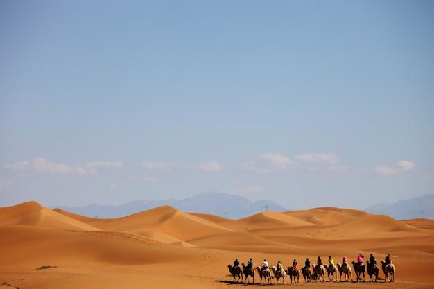 Karawana wielbłądów na pustyni w xinjiang w chinach