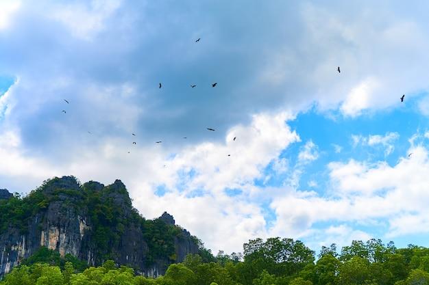 Karmienie orłów. stado orłów krążących po niebie czekając na jedzenie