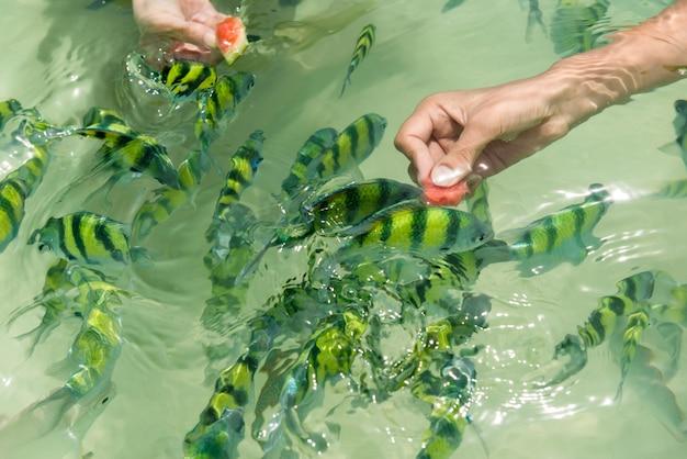Karmienie ryb na plaży