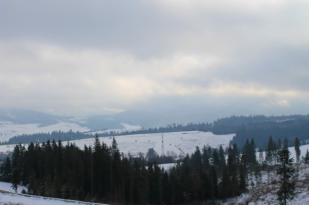Karpaty na ukrainie. zimowy krajobraz
