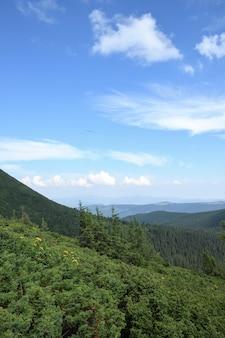 Karpaty, zielone i kwitnące szczyty górskie. czyste niebo ze słońcem i białymi chmurami.