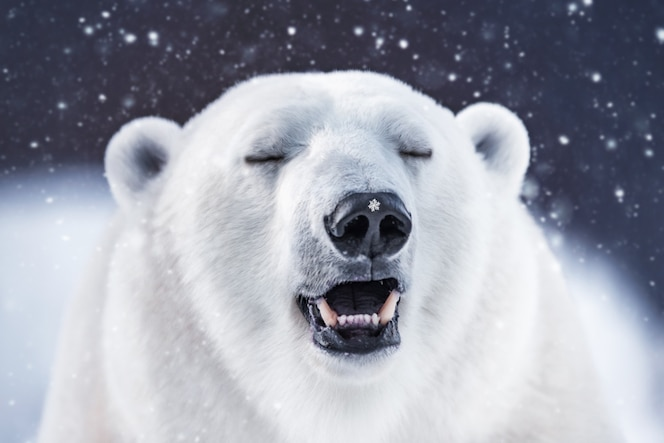 Karta niedźwiedzia polarnego z miejscem na kopię. biały niedźwiedź polarny zimą podczas opadów śniegu. piękne tło.