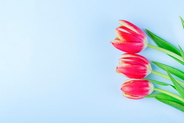 Kartkę z życzeniami z ramą ze świeżych tulipanów na niebieskim tle.