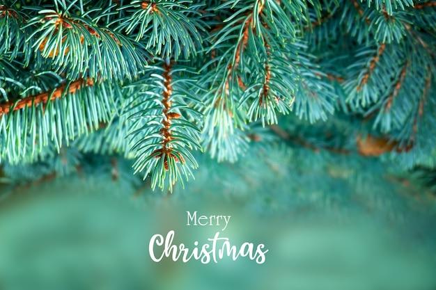 Kartki świąteczne pozdrowienia z pięknymi puszystymi gałęziami jodły i napisem wesołych świąt.