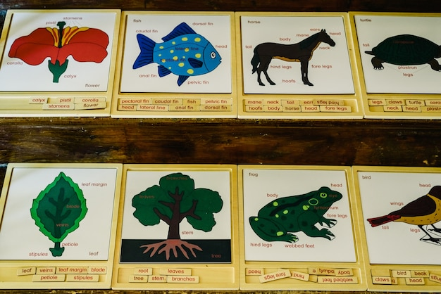 Karty z imionami zwierząt w szkole montessori.