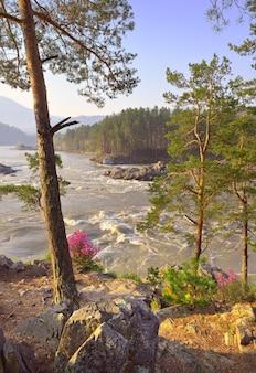 Kaskady manżherok w górach ałtaju sosny na skalistych brzegach rzeki katun