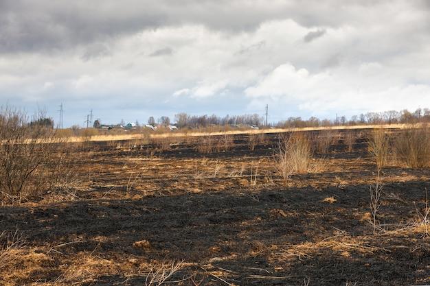 Katastrofalne skutki pożarów lasów
