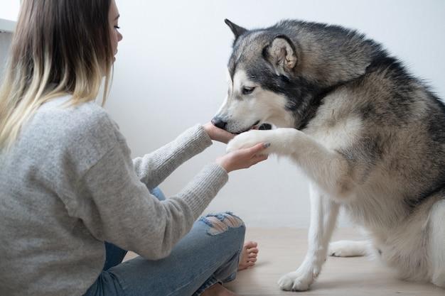 Kaukaska kobieta trenuje alaskan malamute psa. daj łapę.