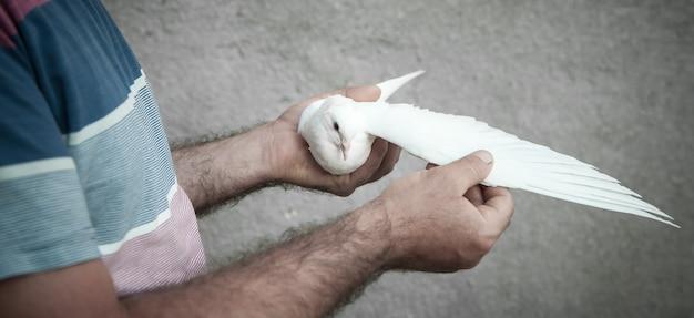 Kaukaski mężczyzna trzyma gołąb na rękach.