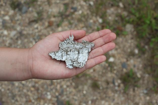 Kawałek kory brzozy w dłoni dziecka