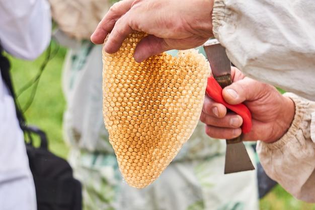 Kawałek wypełnionych miodem plastrów dzikich pszczół w rękach pszczelarza