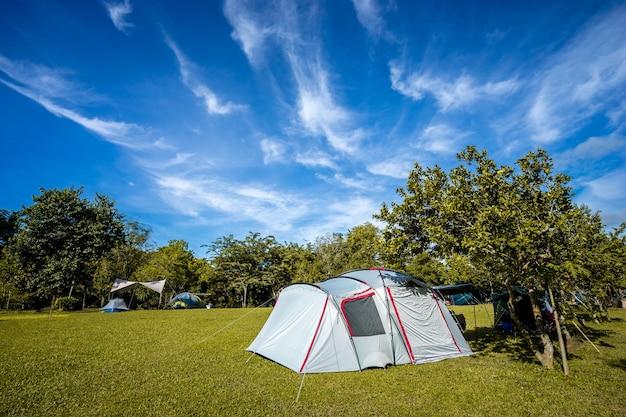 Kemping i namiot na zielonej trawie pod drzewami z błękitnym niebem w parku przyrody