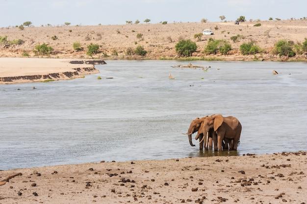 Kenia, park narodowy tsavo east. dwa słonie z pojazdem turystycznym w tle