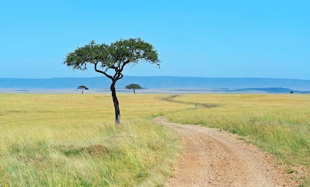 Kenijski krajobraz sawanny masai mara w lecie. afryka, kenia
