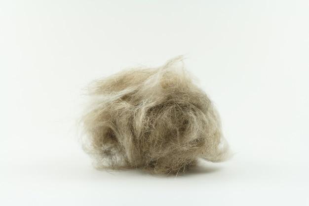 Kępka sierści kota na białym tle, pielęgnacja kota z długimi włosami