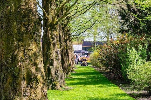 Keukenhof kwiatu parka ogród, amsterdam, holandie