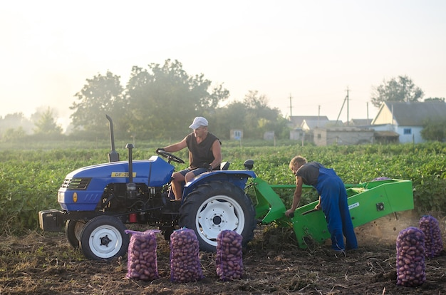 Kherson oblast, ukraina - 19 września 2020 robotnicy rolni na traktorze kopią ziemniaki
