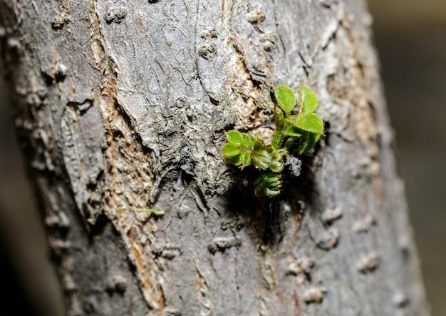Kiełek gałęzi drzewa przy wiejskiej ścieżce