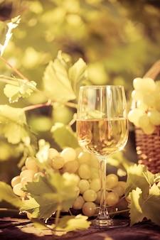 Kieliszek do wina i winogrona z winorośli jesienią